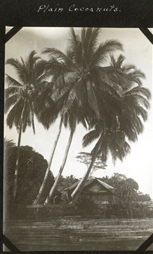 Coconut palm trees and a native home.