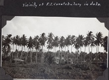 Palm trees in the vicinity of the constabulary at Jolo.