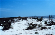 Southeast of area 1; a southeast view of the beach area fronting the eastern endof Mobile Canal.