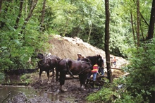 Gentle draft horses were used to transport wood to the sensitive regions of theupper river where heavy machinery would have been inappropriate. The horseswere less expensive and worked in conjunction with  the spyder to minimizedisturbance to the str