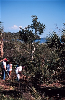 Indian River Lagoon is in the background of this image. The lagoon is one ofthe largest lagoons on the east coast of Florida and is prime habitat for Snookand Tarpon. The lagoon waters are estuarine. This image shows Brazilian Pepperstumps to the rig