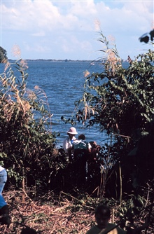 A school teacher shows her students mangrove propagules. The students collectedpropagules and replanted them at the water's edge after the Brazilian Peppershad been removed.