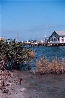 The shoreline at Indian River Lagoon.