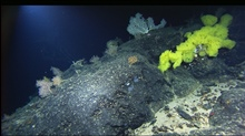 Mountains in the Sea Expedition.Basalt ridge with various sponges and corals.