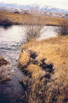 Little Eightmile Ranch along the Lemhi River, one of the areas selected forfor the livestock exclusion fencing restoration project. This imageshows the stream prior to the fencing. Erosion is evident.