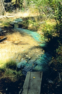 The distinct blue in this image is caused by copper contamination, BucktailCreek. Nothing lives in this environment.