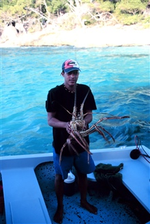 A large spiny lobster, Panulirus interruptus, taken from the reef at MonaIsland.