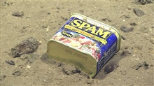 You can't get away from spam - either in the deep or on your computer.