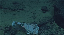 A plastic bag that has found its way to the seafloor.