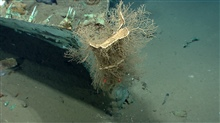 Artifacts from Monterrey A shipwreck.Hydroids growing on bow where coppersheathing appears to have been lost.