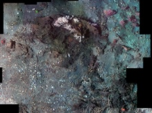 Photomosaic of Madrepora reef with surrounding clamshell debris(below and left) and Paramuricea gorgonians (soft corals) on the periphery.Mosaic is made up of approximately 70 images and area isapproximately 20 meters squared.