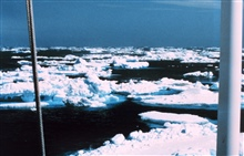 Ice floes off the Antarctic Peninsula