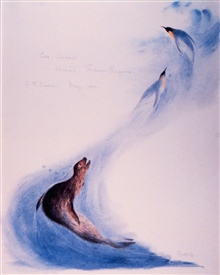 Water color by Edward Wilson of leopard seal pursuing penguins.  Wilson was amember of the ill-fated Robert Falcon Scott expedition.