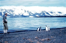 Adelie penguins on the beach at Deception Island