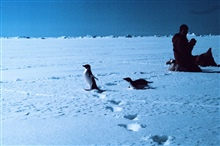 Scientists photographing Adelie penguins