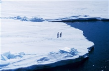 Penguins on sea ice