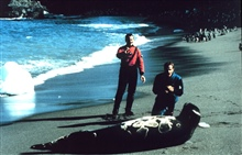 Leopard seal; Lieutenants Rich Behn and Dave Neandergingerly approach large leopard seal.