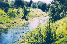 Brush Creek is beautiful but it lost its vegetation when the waterway waschannelized for flood control. The Brush Creek restoration project providedfunds to assist in the planting of 2000 native trees to provide food, shelterand shade for steelhead t