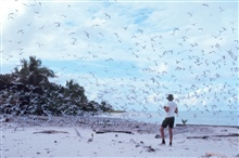 A tern rookery on Helen's Reef.  Scientist was making a count of the number ofnests.