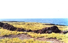 A lava terrace with colonizing greenery extends to the sea.