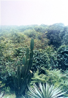Large cactus amidst tropical vegetation