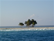 Palm trees on Clipperton Island.